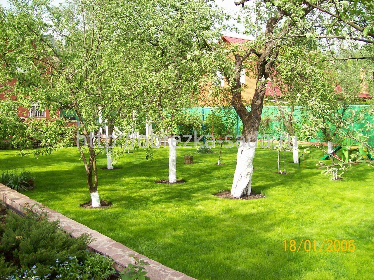 Яблоневый сад на даче своими руками фото